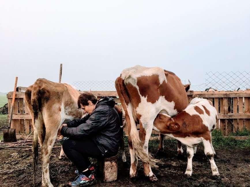 mungitura in Mongolia
